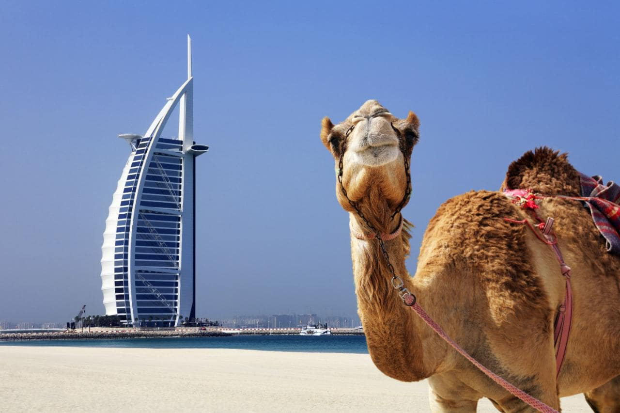 Amena Viajes Y Turismo Online 187 Dubai Y Egipto 14 Noches